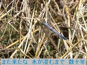 Iob_photo_hikuling_siokaratonbo