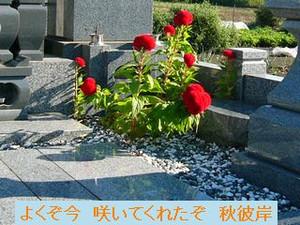 Iob_photo_hikuling_bochinokeitounoh