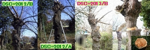 Iob_sendan_syukubatu_2013_4pix