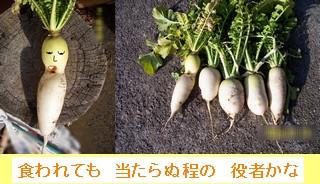 Iob_photo_hikuling_daikon_kao