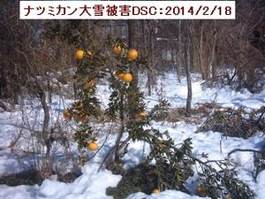 Iob_natumikan_higai_2014