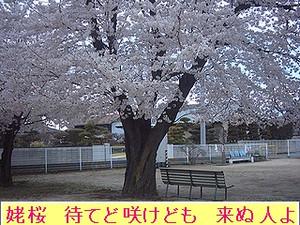 Iob_photo_hikuling_sakura_mujin_kou