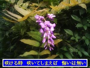 Iob_photo_hikuling_natuzakinofuji