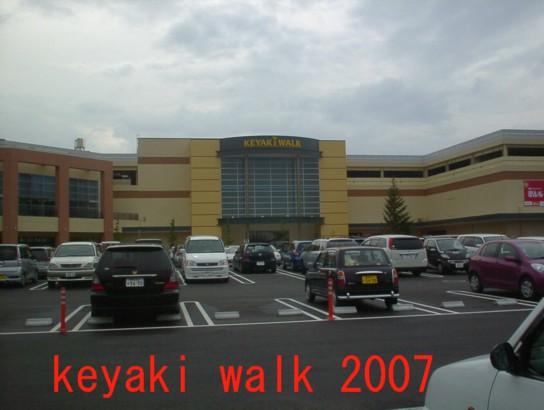 Keyaki_walk_3