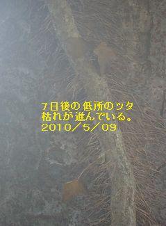 Y100509b2