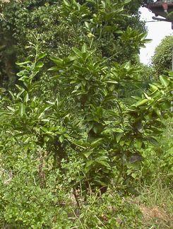 Sisiyuzu2010_s
