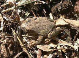 Frog_winter_s