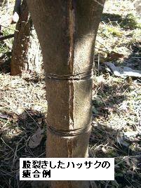 Matasaki_yugou2