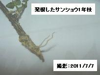 Sansyou_sasiki