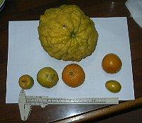 Kankitu_fruitax6