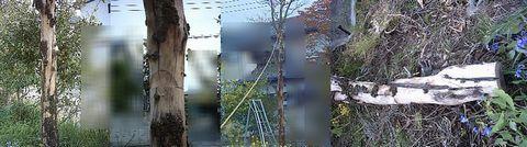 Bopix_hanamizuki_kiru_130423_s