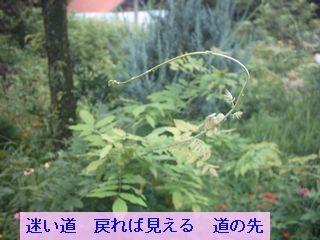 Iob_photo_hikuling_fujinoturu