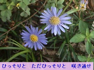 Iob_photo_hikuling_miyakowasure