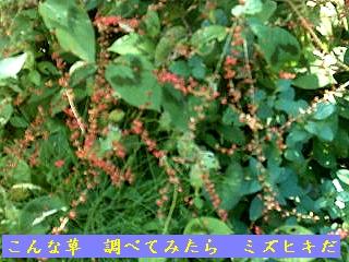 Iob_photo_hikuling_mizuhiki