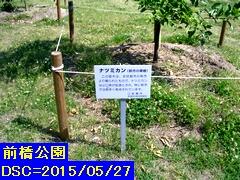 Iob_natumikanmaebaship