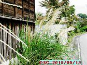 Iob_susukiho_160915
