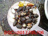 Iob_hatugangpeanuts