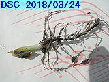 Iob_2018_min_p_tousi_20180324