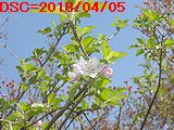 Iob_2018_apple_flwr__20180405