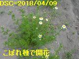 Iob_2018_kamomiru_kaika__20180409