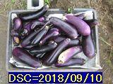 Iob_2018_nasu_no2_20180910