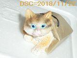 Iob_2018_toy_cat_20181122