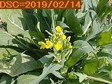 Iob_2019_zatuna_hana_20190214