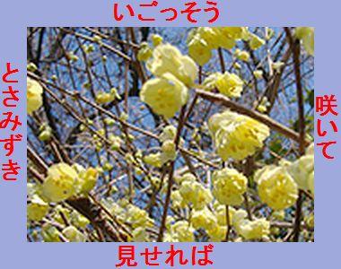 Iob_2019_photo_hikuling_tosamizuki_