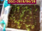 Iob_2019_sasiki_my_plant_20190428