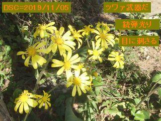 Iob_2019_tuwabuki_