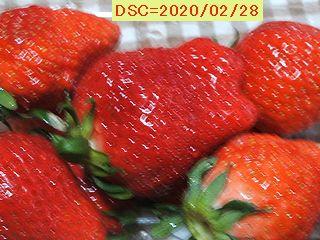 Iob_2020_ichigo_20200228
