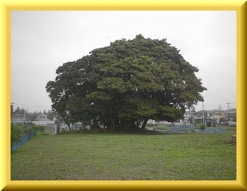 Iob_2020_trees_fujisaki_kaizuka_2