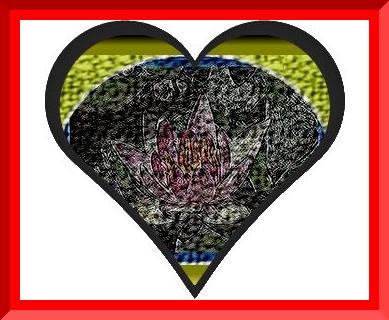 Iob_2020_suiren_7_heart_irfanview__