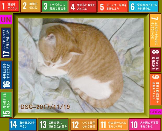 Iob_2021_cat_jngl_2017_11_19sdgs