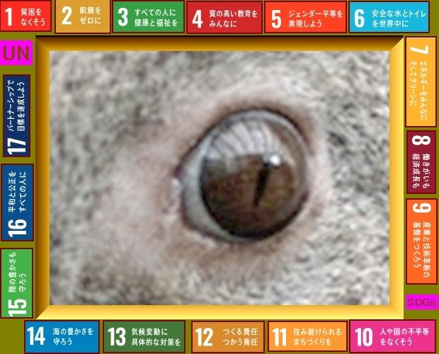 Iob_2021_koala_and_sdgs_20210218