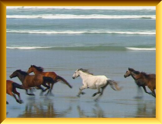 Iob_2021_w_horse__in_pc_20210223