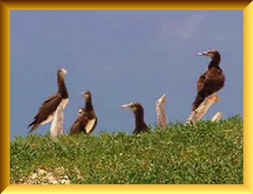 Iob_2021_birds__in_pc_20210227